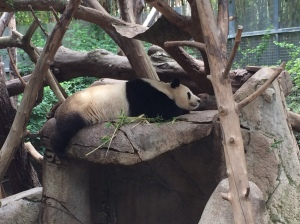 Mom panda tired out dealing with her cubs.