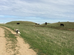 Innocent looking cows (and our trail friend Gus), but really scary evil monsters